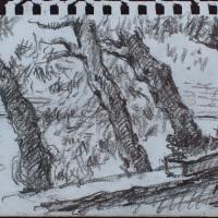 Drevesa v Novigradu
